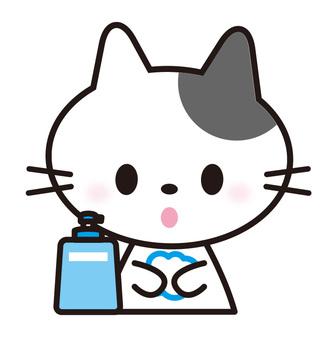 Cat _ hand wash
