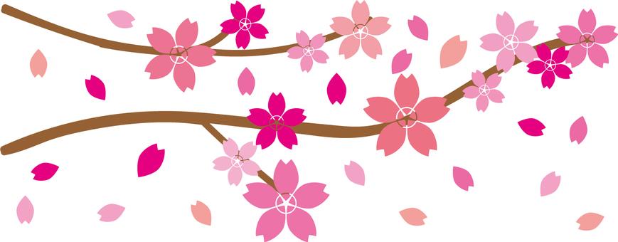 h28 Sakura material 01