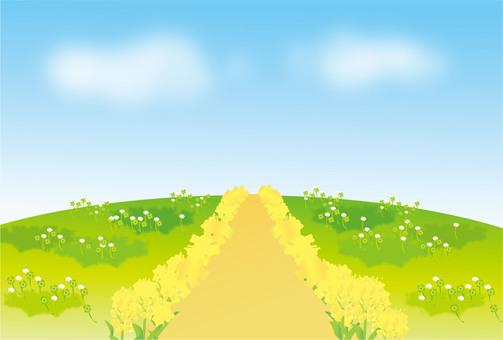 Rape flower road and prairie