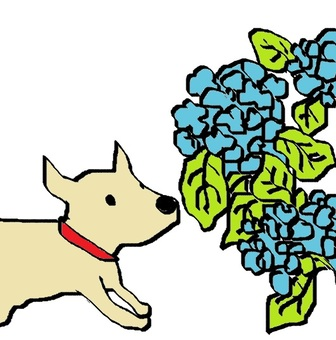 Hydrangea and dog