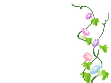 정원 나팔꽃