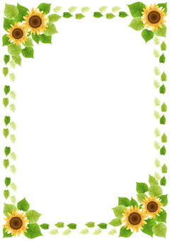 Sunflower 72