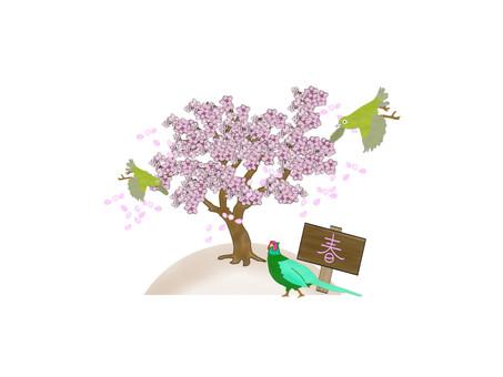 Spring image
