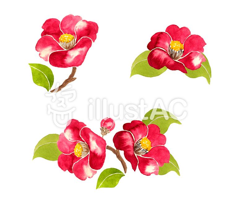 水彩の椿の花イラスト No 1298016無料イラストならイラストac