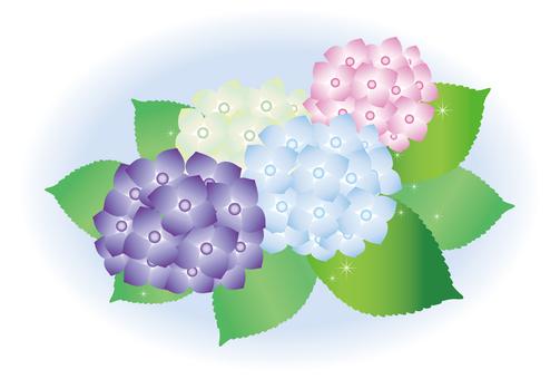 Hydrangea blossoming in the rain