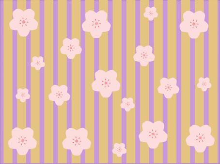 櫻花滿了。春天的春天