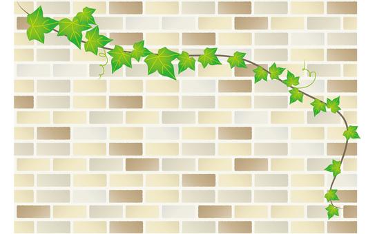 常春藤和牆