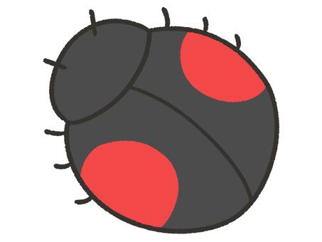 Cute ladybird, black