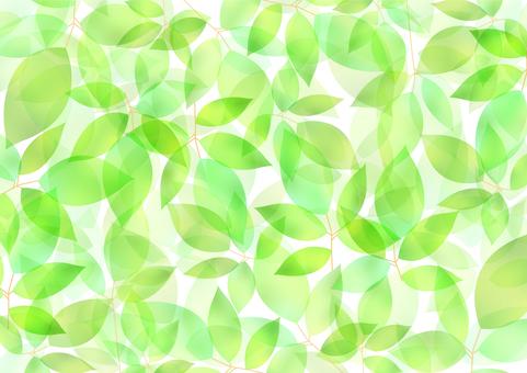 Fresh green material 57