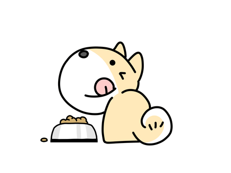 Shiba Inu during meal