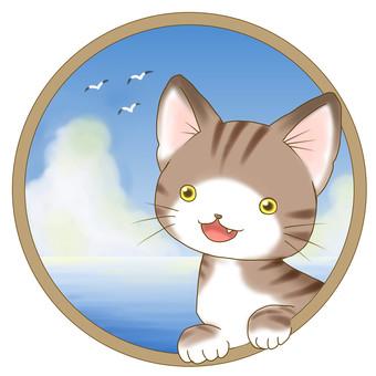 Tiger cat - sea