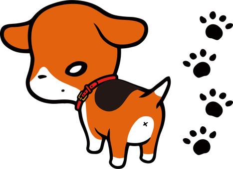 Beagle dog and footprints