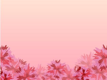 康乃馨背景