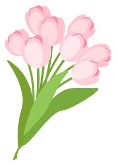 Tulip (pink