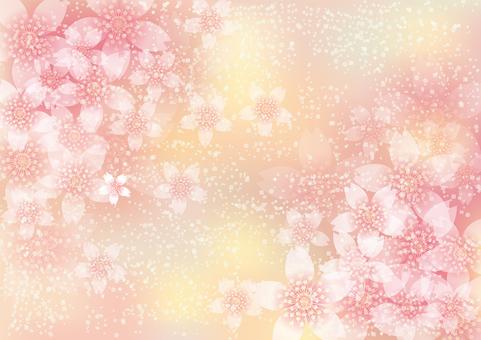 벚꽃의 꽃 156