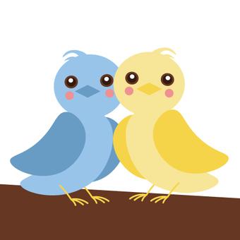 작은 새 (커플)
