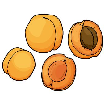 살구 / 살구 (살구) / Apricot