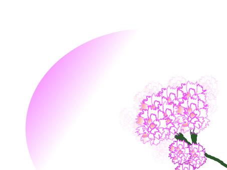 康乃馨框架4