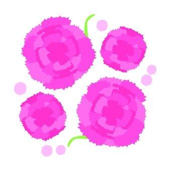 카네이션 (핑크)