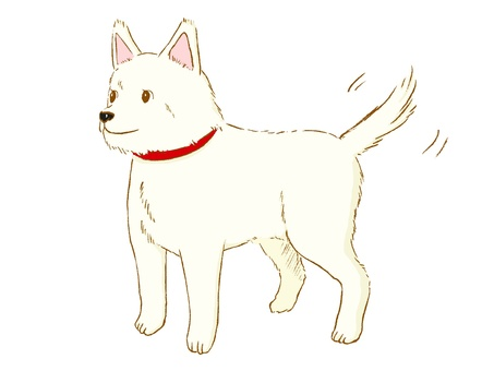Dog-kun (white).