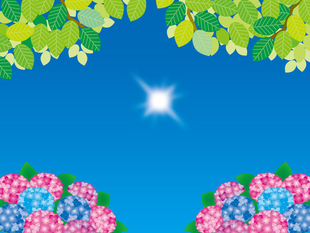 Hydrangea (45) Summer fresh green and sun