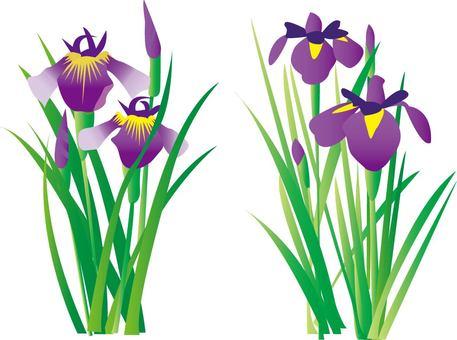 Iris Girls Children's Day