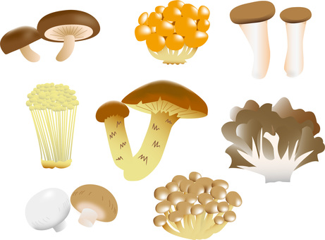 Mushrooms (edible) Various