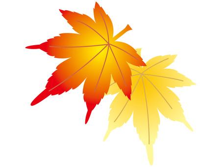 Maple leaves maple