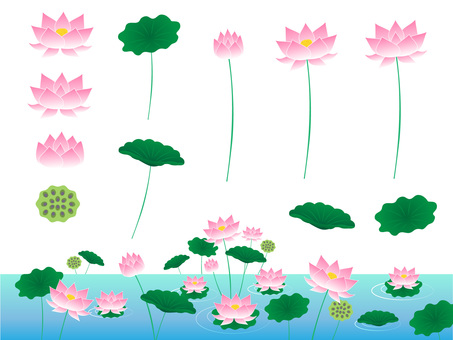 Lotus - flower illustration material