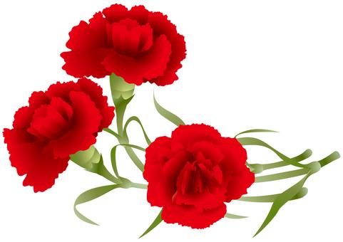 Carnation 12