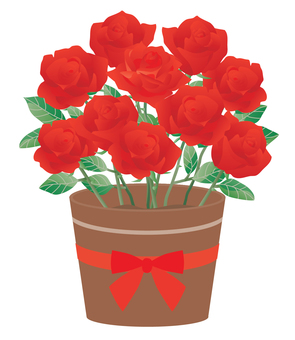 Rose_potted 01 red