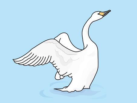 Swan (Swan) 1