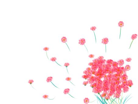 Yakari菊花花粉紅色