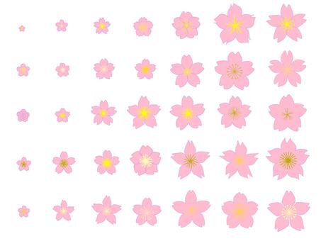 Set of cherry blossoms①