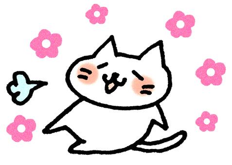 Loose cat