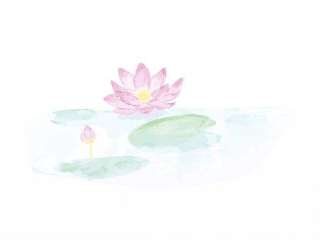 蓮の花 水彩 ピンク