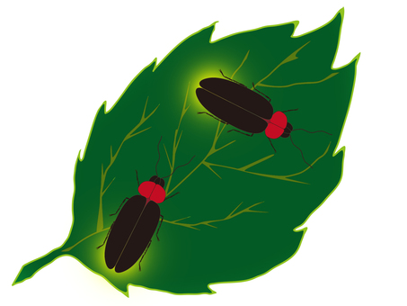 Insect (firefly)