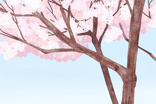 Cherry blossom background 01