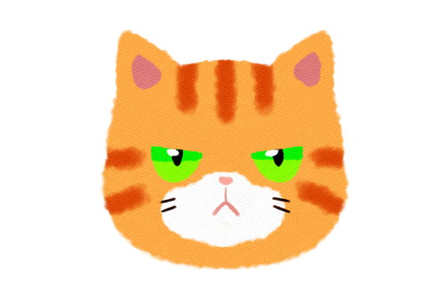 The face of a brown tabby cat