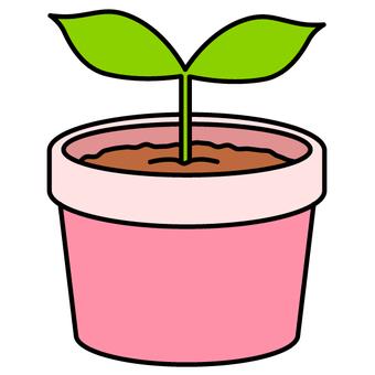 Seedlings / Eco (Pink