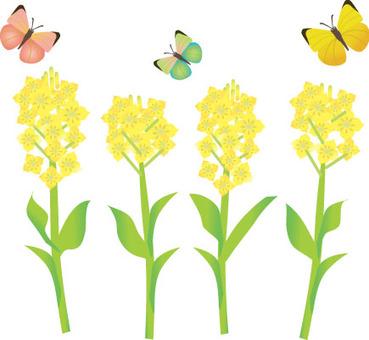 Rape flowers and butterflies