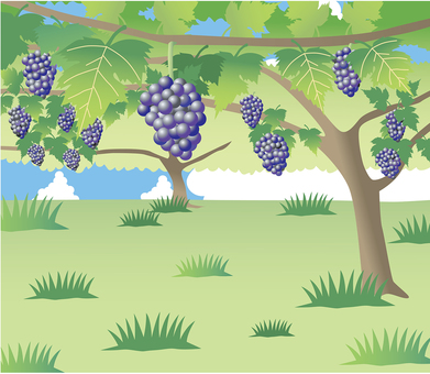 Scenery with grapes / Vineyard