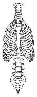 Ribs and backbone