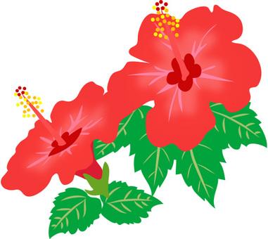 Hibiscus material 3