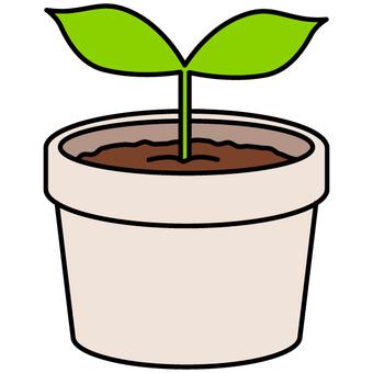 Seedlings / eco (terra cotta