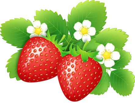 Realistic strawberries and flowers and leaves