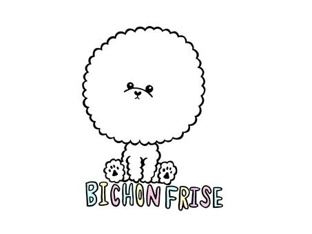 Bichon Friese