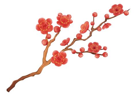 매화의 꽃 일러스트
