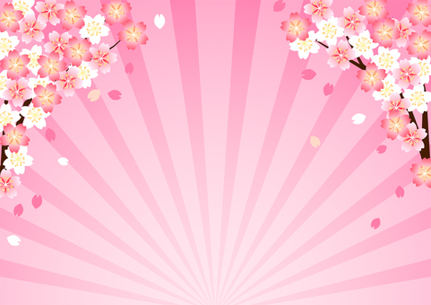 Cherry blossom and pink concentrated line background