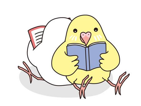 Reading parakeet